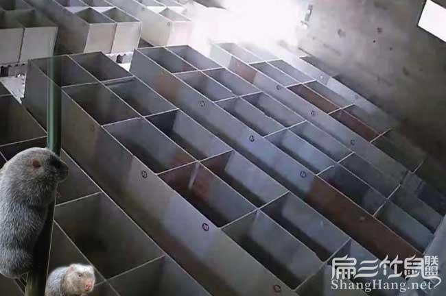 广西竹鼠养殖场