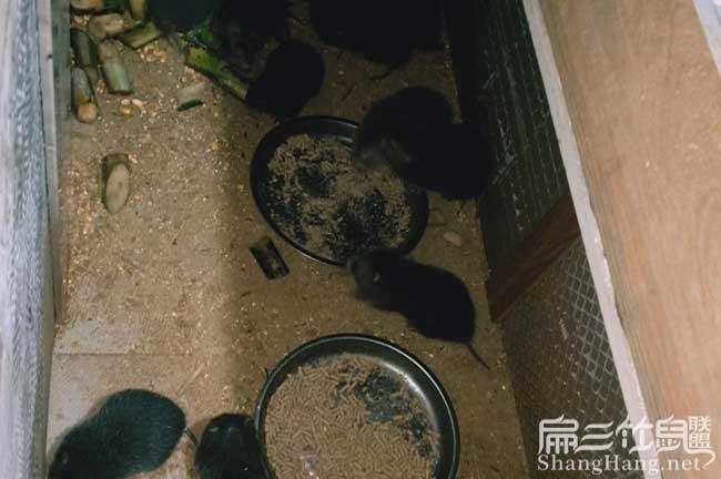 长沙竹鼠养殖池