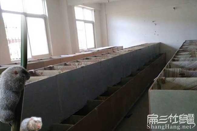 湖南竹鼠养殖