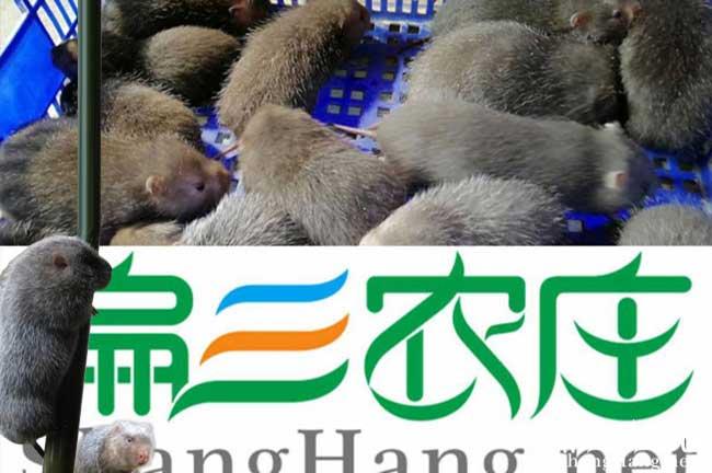 绍兴竹鼠养殖