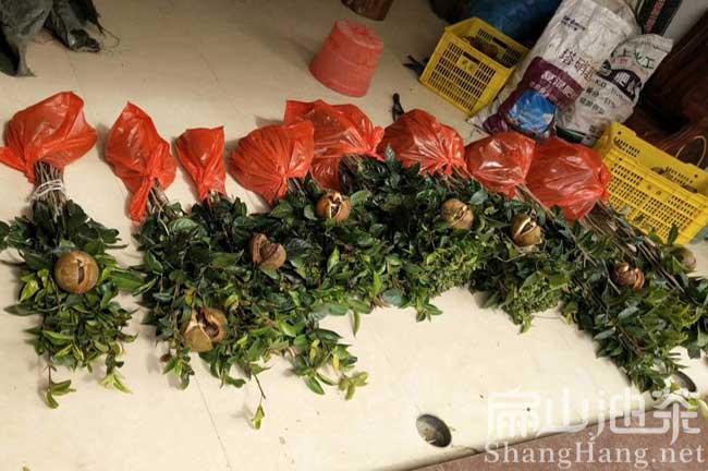 中国油茶基地