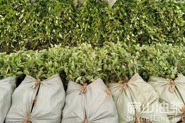油茶种植技术视屏