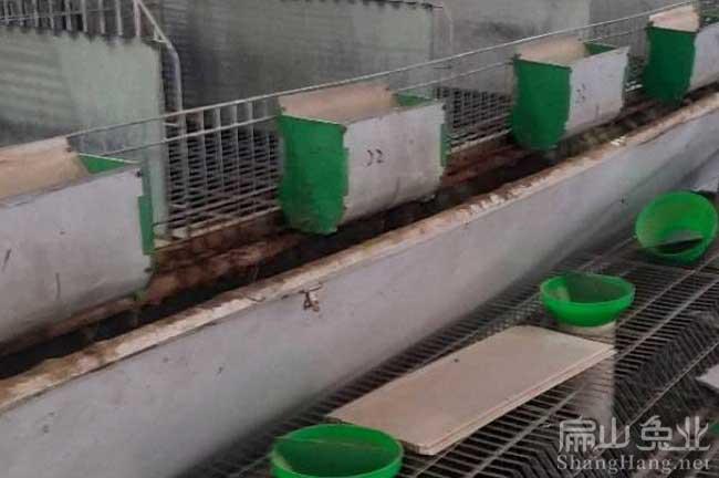 吉安兔子养殖