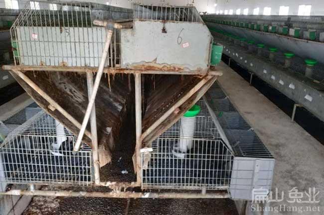 南昌兔子养殖设备