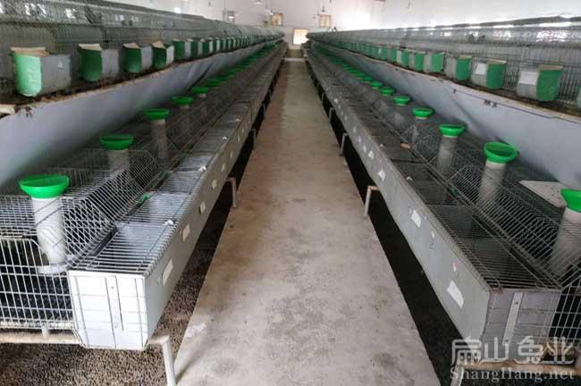 最大乌兔养殖基地