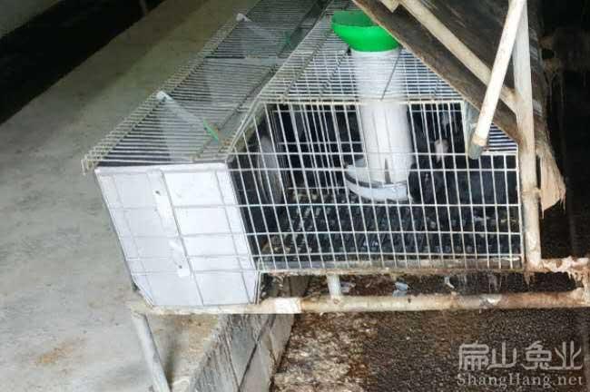 云南种兔养殖基地