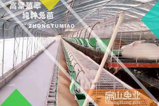 福州新西兰兔养殖基地