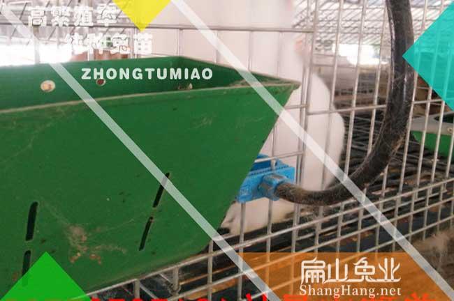 福建兔子养殖设备