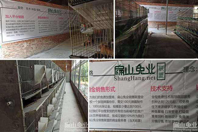 福建豚鼠养殖场