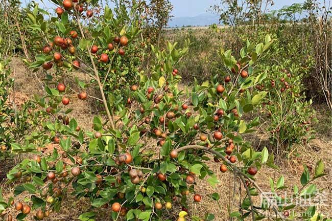 油茶种植管理