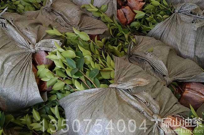 琼海油茶基地
