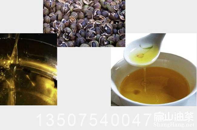 中国茶油批发