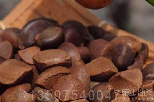 茶籽回收厂家