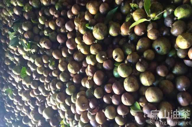 阳东区茶籽回收
