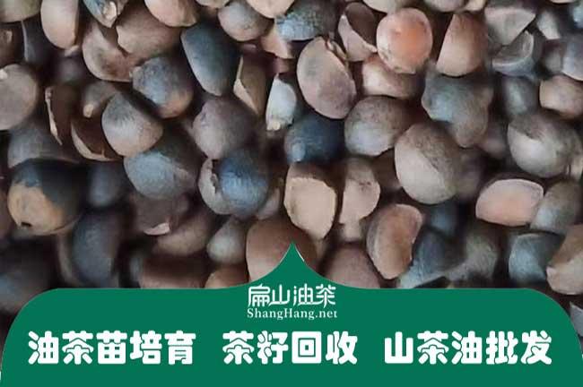 广西茶籽回收