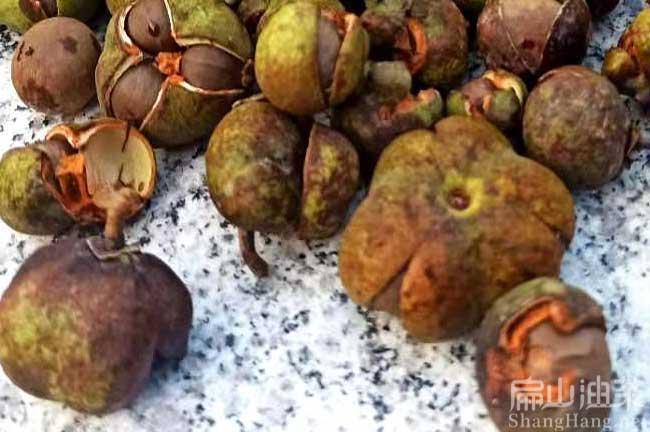 贵州茶籽回收