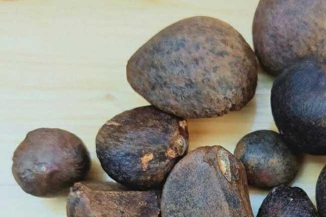 广西越南茶籽批发