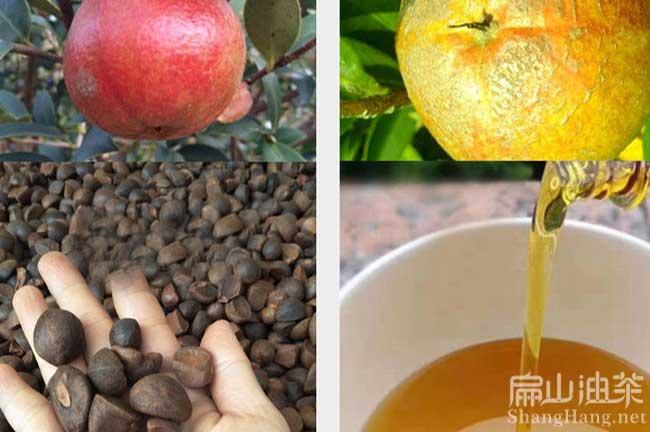 中国茶籽回收