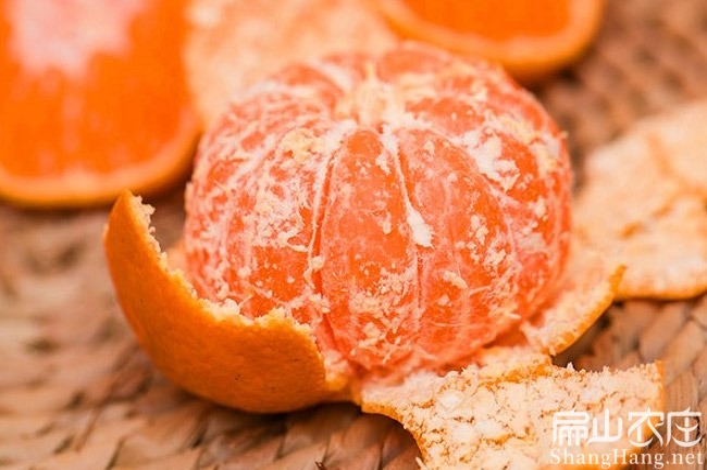 湖南橘子苗培育