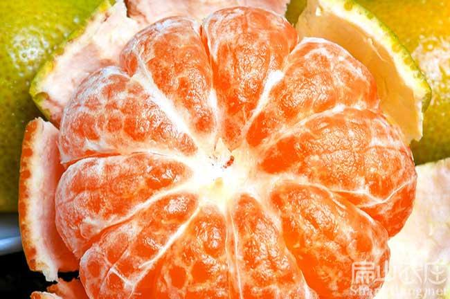 福州砂糖橘苗
