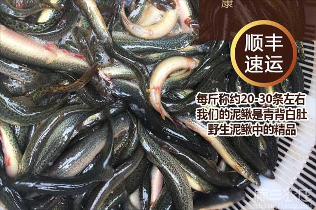 漳州泥鳅养殖