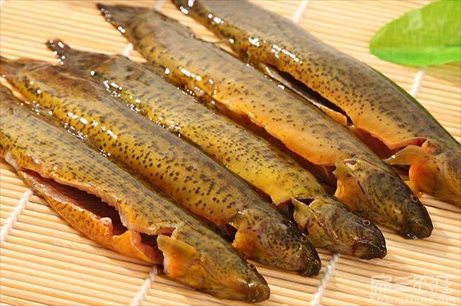 浙江泥鳅种苗价格