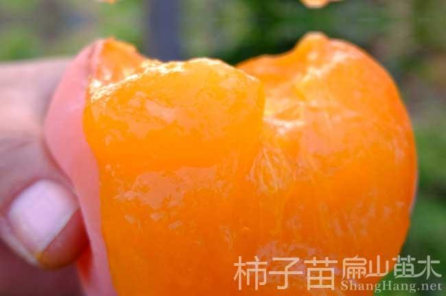 福州柿子种植基地