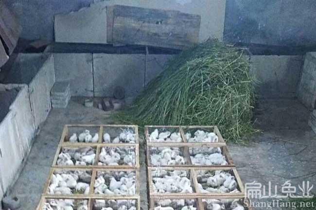 广东豚鼠回收