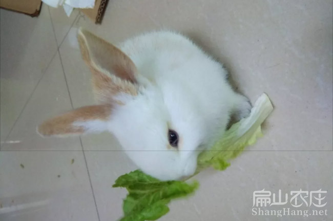 浙江兔子养殖网