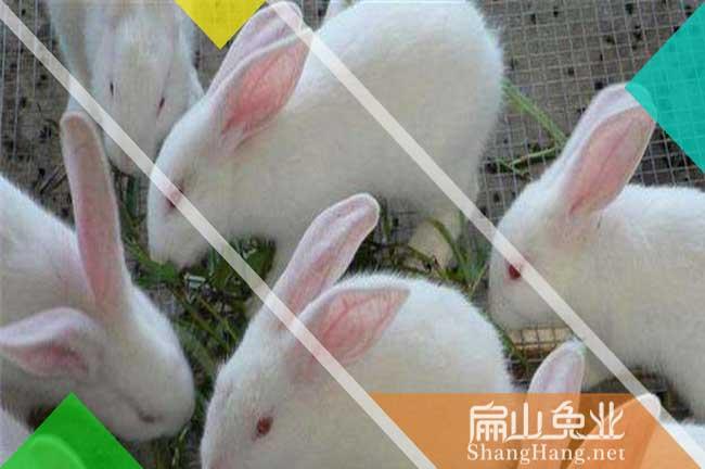 宁波兔子养殖基地
