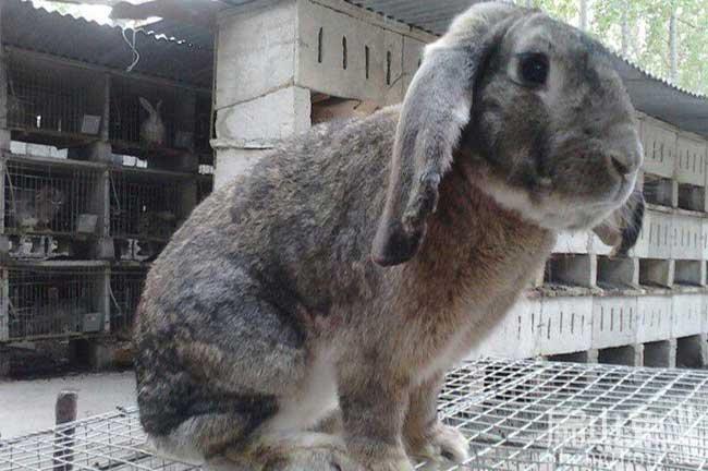 武平兔子养殖