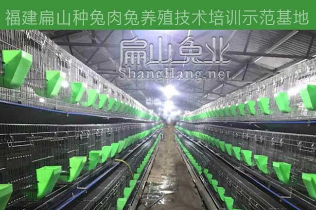 惠州兔子养殖培训班