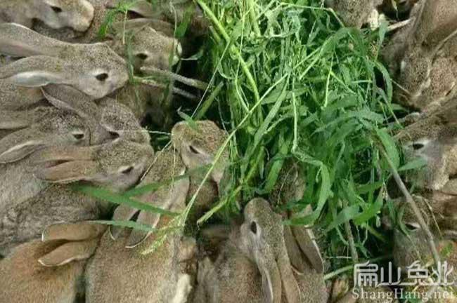 江西养兔网