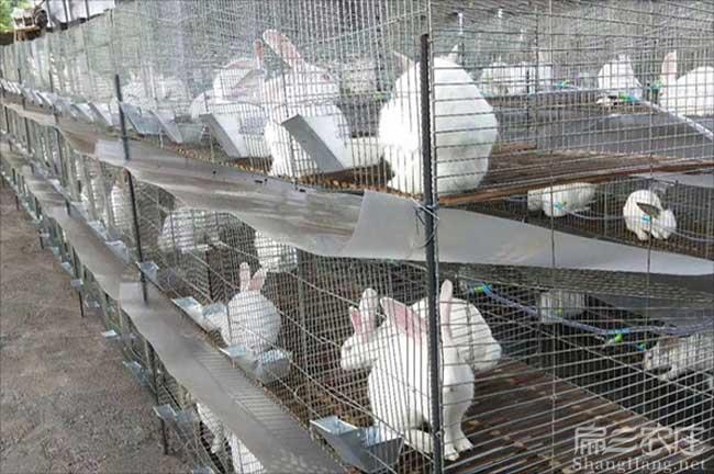 漳州兔子养殖