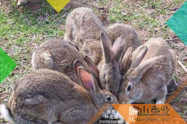 广东人想养殖兔子