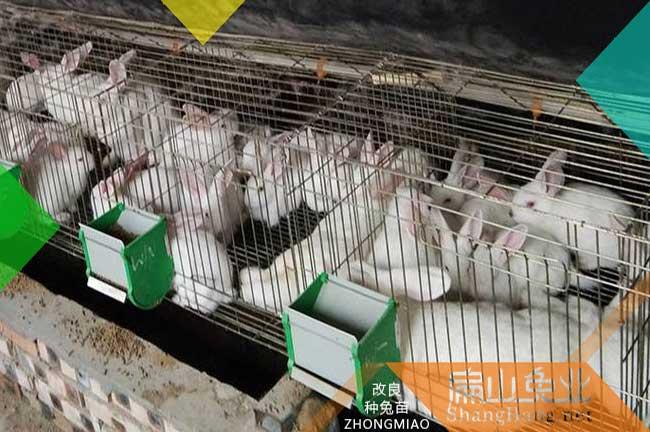 连城兔子养殖场