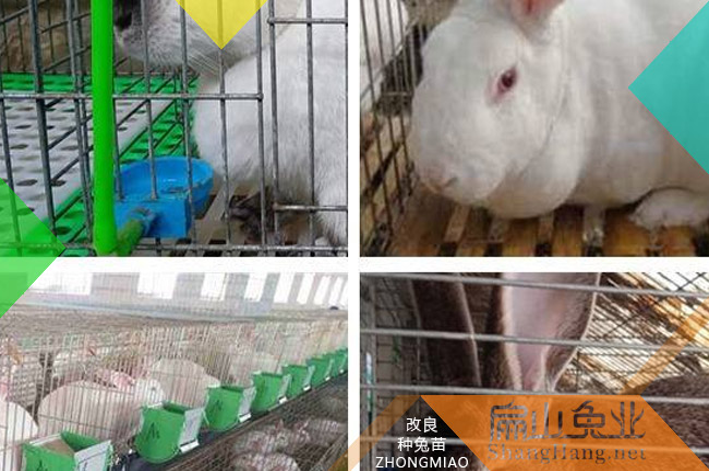 惠州兔子回收