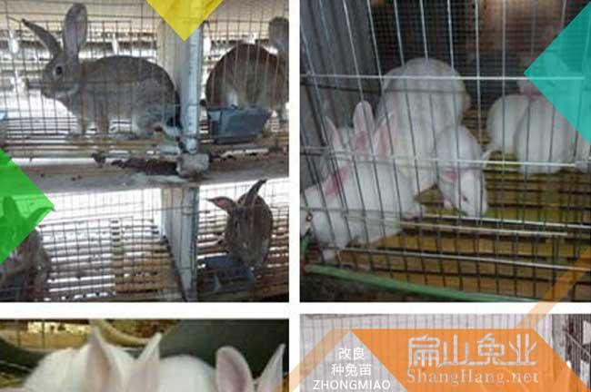 鹰潭肉兔养殖