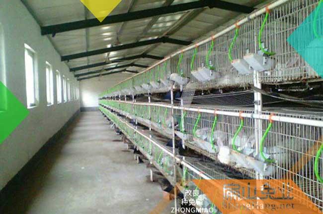 龙岩兔子养殖场