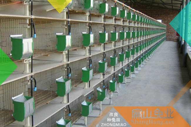 广东兔子养殖场