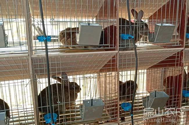丽水野兔种苗