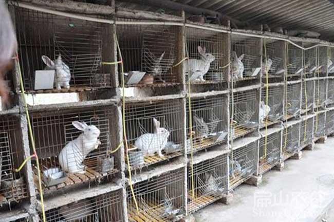 福州野兔养殖