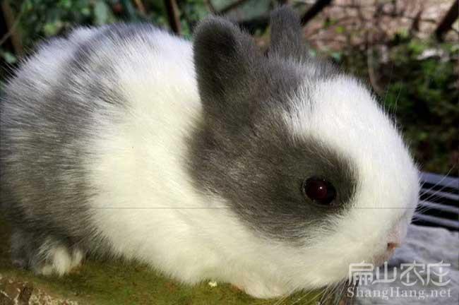 安远兔子养殖