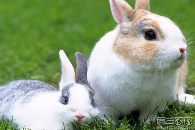 九江兔子养殖