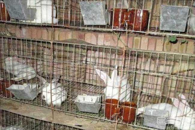 奉化兔子种苗
