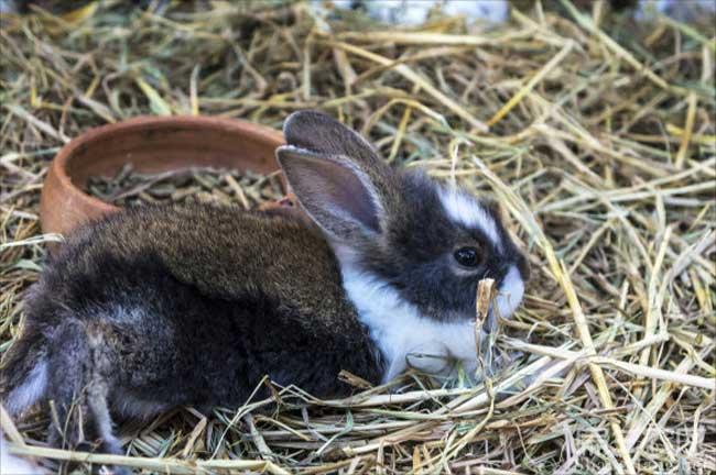 龙岩花兔子
