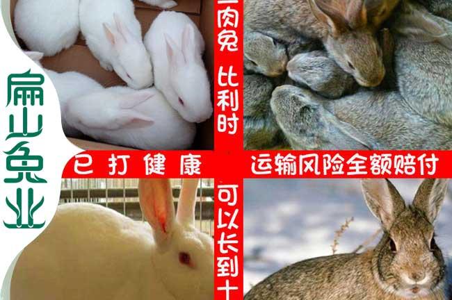 福建恢兔子养殖