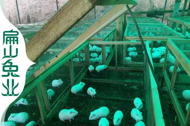 福建散养兔子