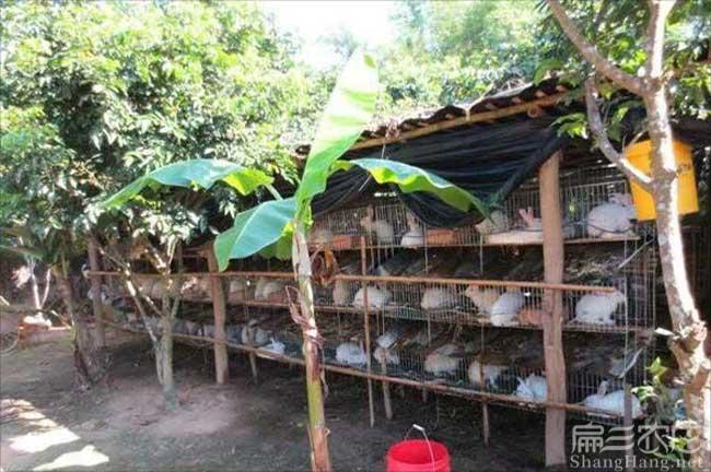 广东兔子养殖
