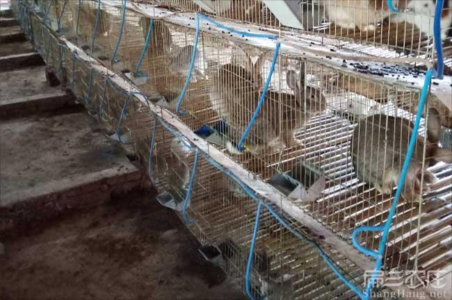 宁波兔子养殖